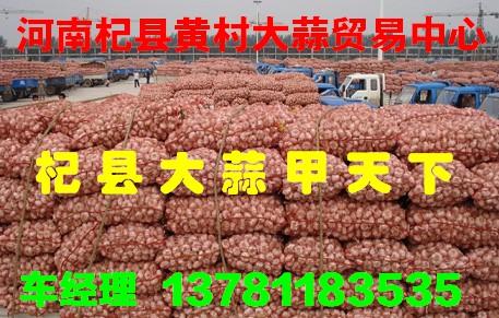 杞县黄村大蒜34
