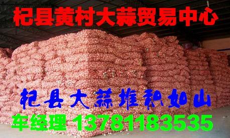 杞县黄村大蒜35
