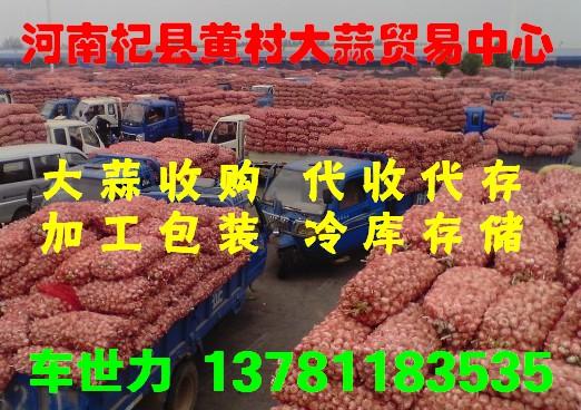 杞县黄村大蒜28