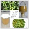 番泻叶皂甙20% 番泻叶提取物 番泻叶粉 保健品原料